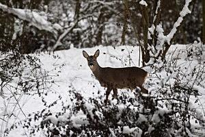 Winter Snow Scenics