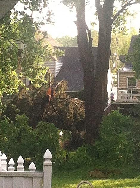 Tree down in Whitesboro following thunderstorm