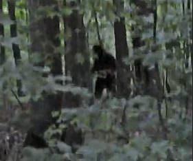 Incredible Bigfoot Footage (2013)