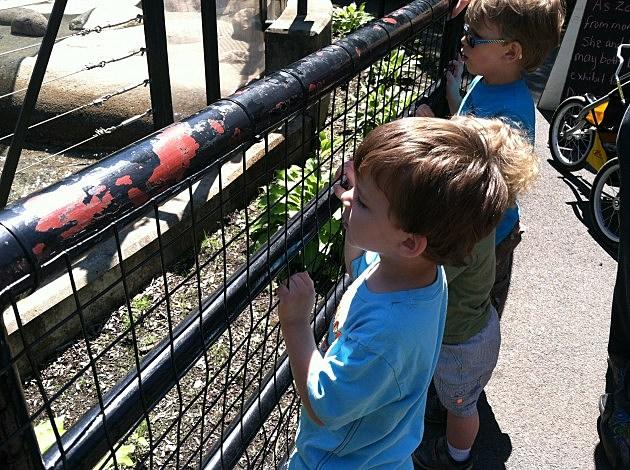 kids at Utica Zoo